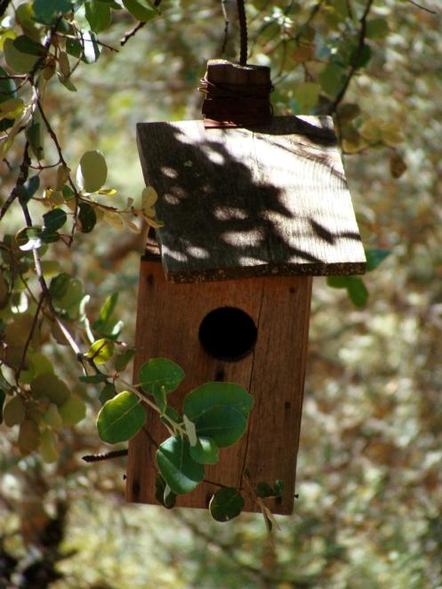 monkey and sofia blog nesting header